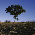 Commissioner discusses reported rise in attempted farmer suicides on ABC Radio National